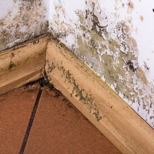 Mold Remediation and Removal Services in Thornton, Colorado